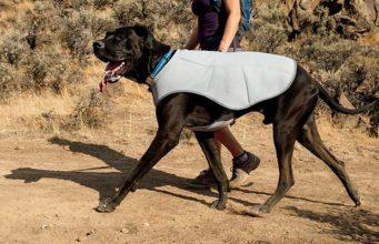 Best Cooling Vests for Dogs