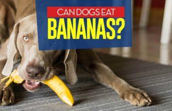 Can I give my dog bananas