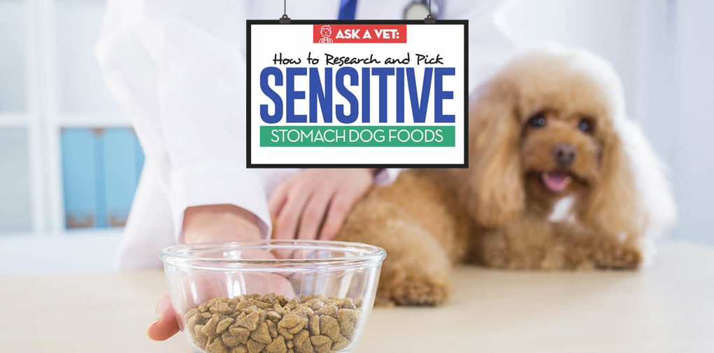 Dog Food for Sensitive Stomachs - Veterinarians Buying Guide for Pet Owners