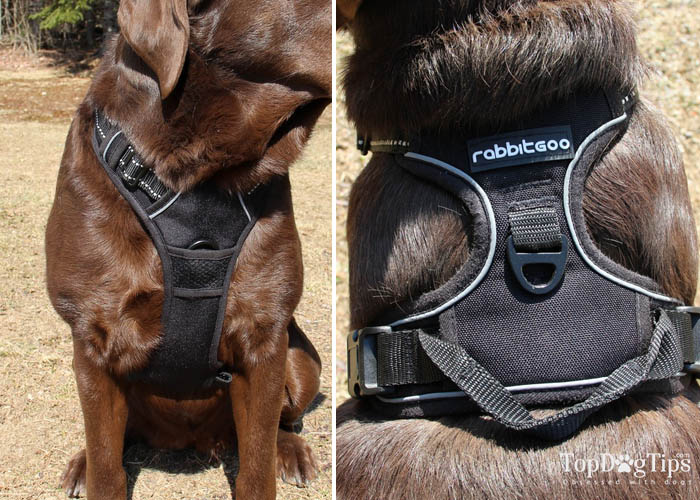Dual-clip types of dog harnesses