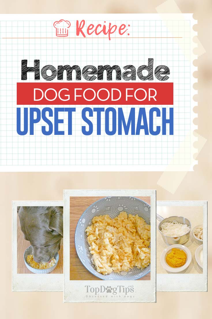 Food To Soothe Dog S Upset Stomach
