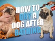 How to Dry a Dog After Bathing