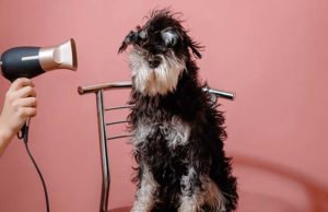 How to Dry a Dog After Bathing (Using Towel or Hairdryer)