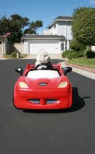 Prepare for Car Rides