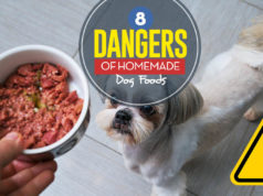 The 8 Dangers of DIY Homemade Dog Food