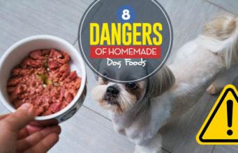 The 8 Dangers of DIY Homemade Dog Food