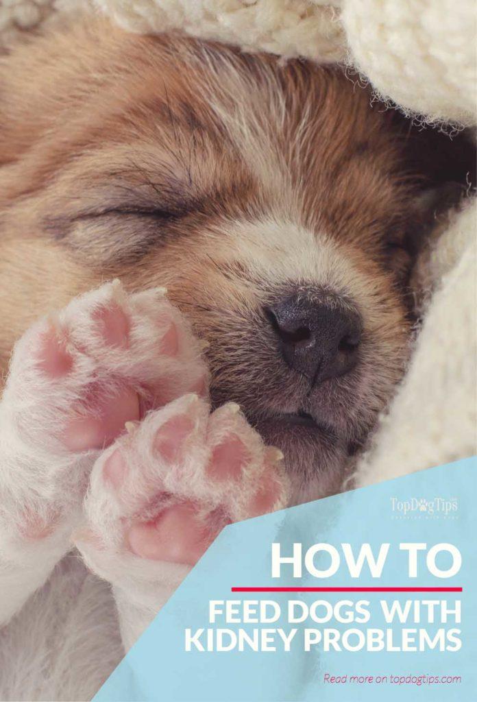 Tipps für die Nierendiät bei Hunden