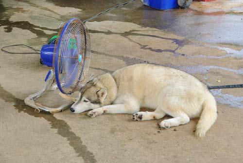 Bring 'Outside Dogs' Inside