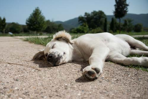 Exhaustion danger in dogs