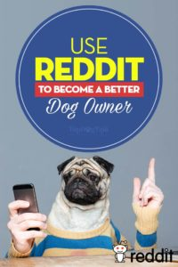 Reddit Dogs - How to Use Reddit to Become a Better Dog Owner