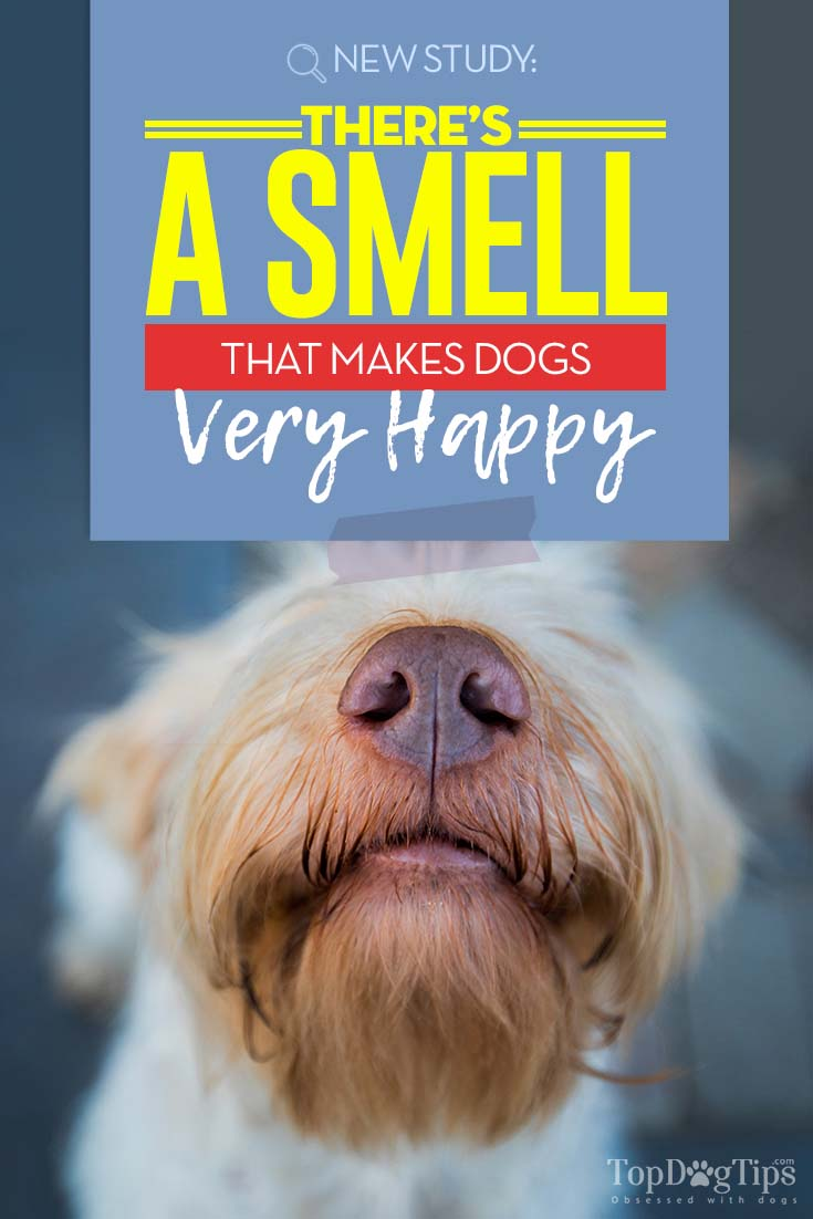 Research Shows Dogs Have Their Favorite Scent – It's the Owner's Smell