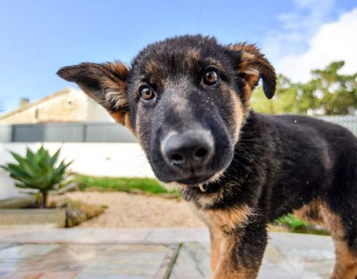 Science Determines the Exact Age When Puppies Are Their Most Adorable