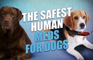 15 Safe Human Meds for Dogs