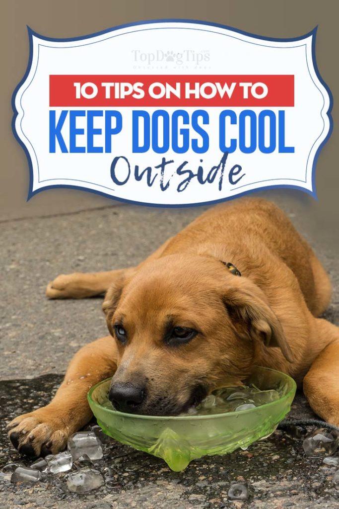 Top 10 Best Tips on How to Keep Dogs Cool Outside