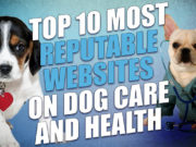 10 Most Reputable Sites to Refer to for Dog Care and Health Advice