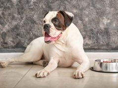 10 Homemade Dog Food for Bladder Stones Recipes