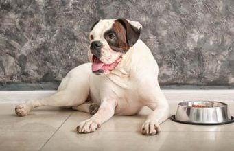 10 Homemade Dog Food for Bladder Stones Recipes