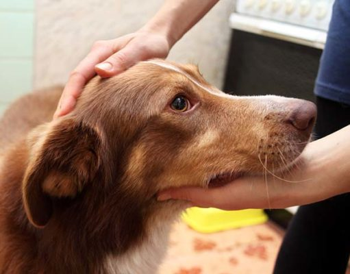 Could the Next Deadly Flu Pandemic Start With Dogs