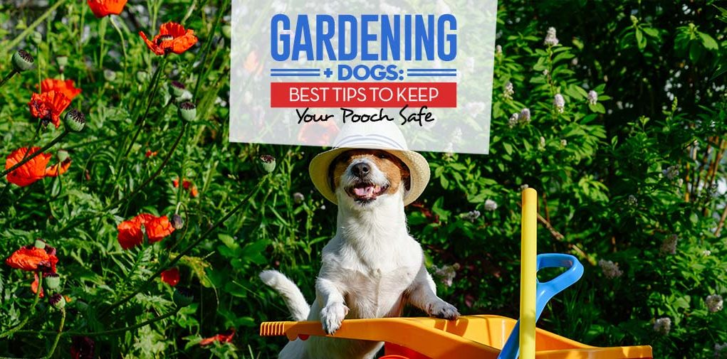 Gardening and Dogs - Top 9 Tips to Keep Your Pooch Safe