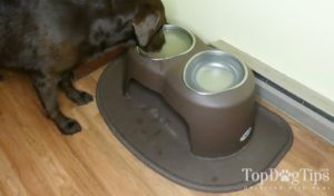 PetComfort High Feeding System for Dogs