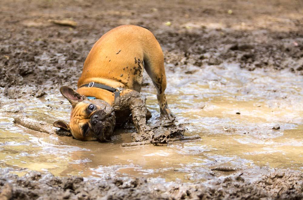 Roll in dirt or mud