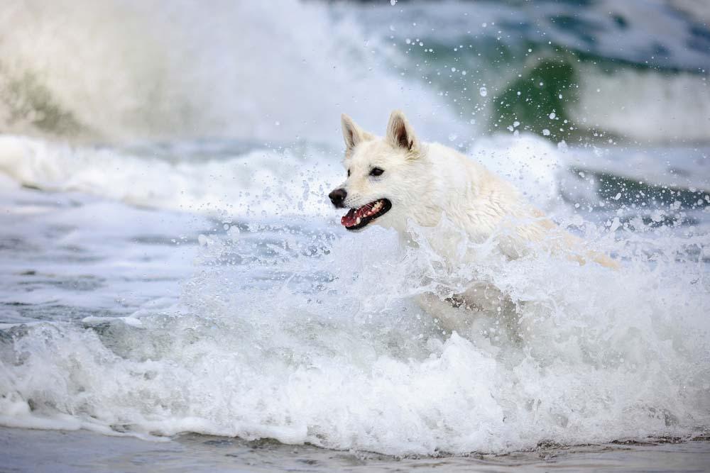 Run on the beach, swim in the ocean