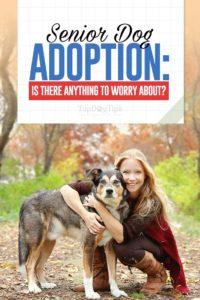 Senior Dog Adoption - Should You Be Worried