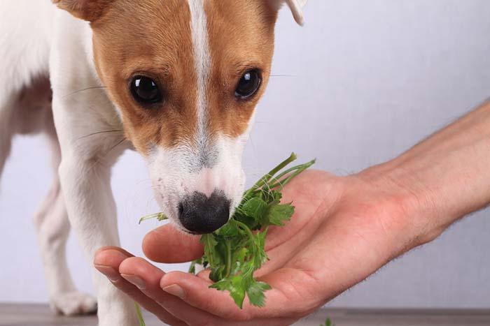 To Freshen Doggy Breath