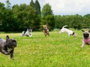 20 Best Dog Parks in Austin, Texas