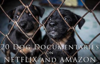20 Dog Documentaries on Netflix and Amazon Prime