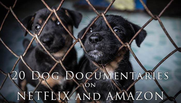 20 Best Dog Documentaries On Netflix And Amazon Prime In 2018