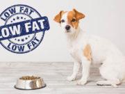 Best Low Fat Dog Food Brands