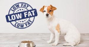 Top 5 Best Pet Odor Eliminator For Removing Dog S Urine