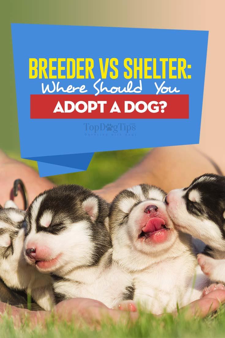 Breeder vs. Shelter Where Should You Adopt a Dog