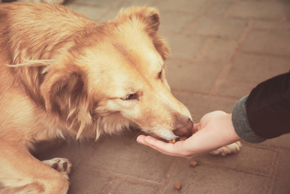 Do Hand Feeding