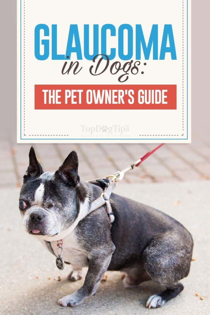 Dog Glaucoma Guide