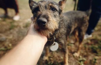 How Social Media Helps to Adopt Dogs