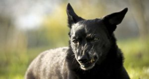 Reactive Dogs - 5 Things You Need to Know