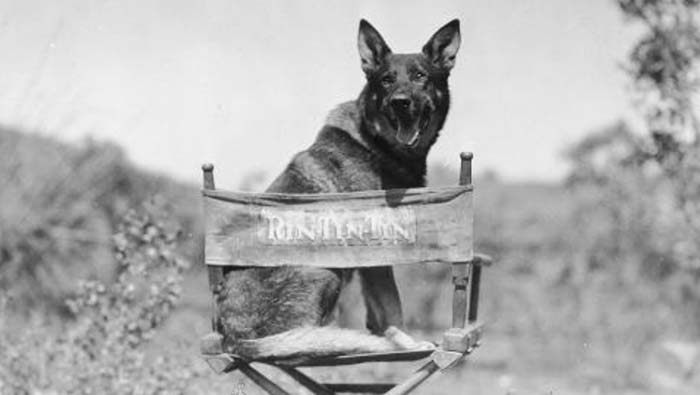 Rin Tin Tin the German Shepherd