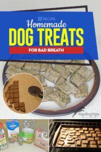 The Best Homemade Dog Treats for Bad Breath Recipe