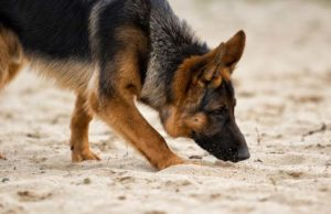 The Value of Letting Your Dog Stop and Sniff During Walks