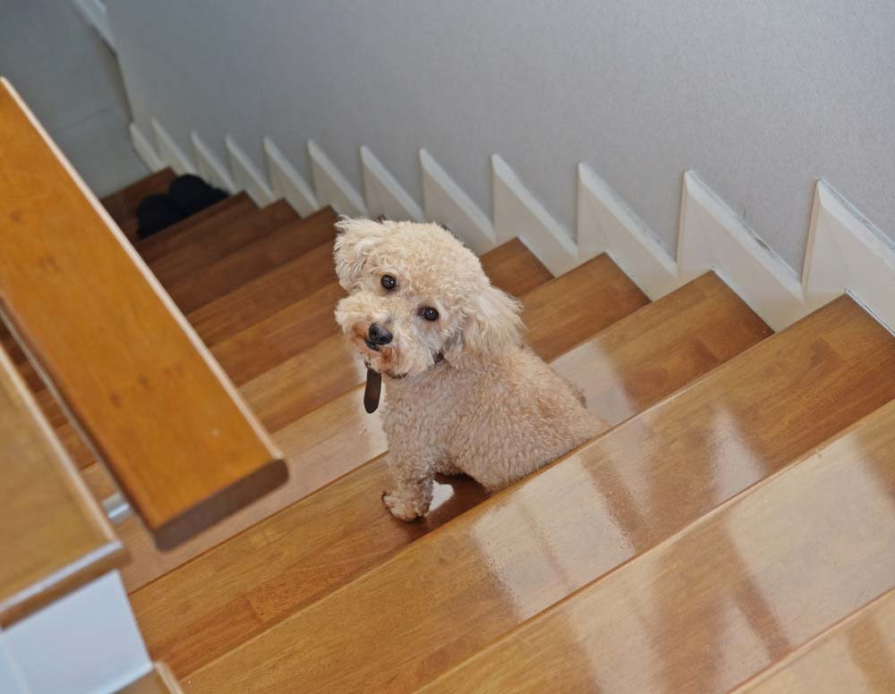 Use Stairs on Your Hyperactive Dog