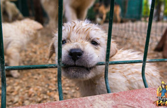 What Are Puppy Mills and How to Avoid Them - Podcast