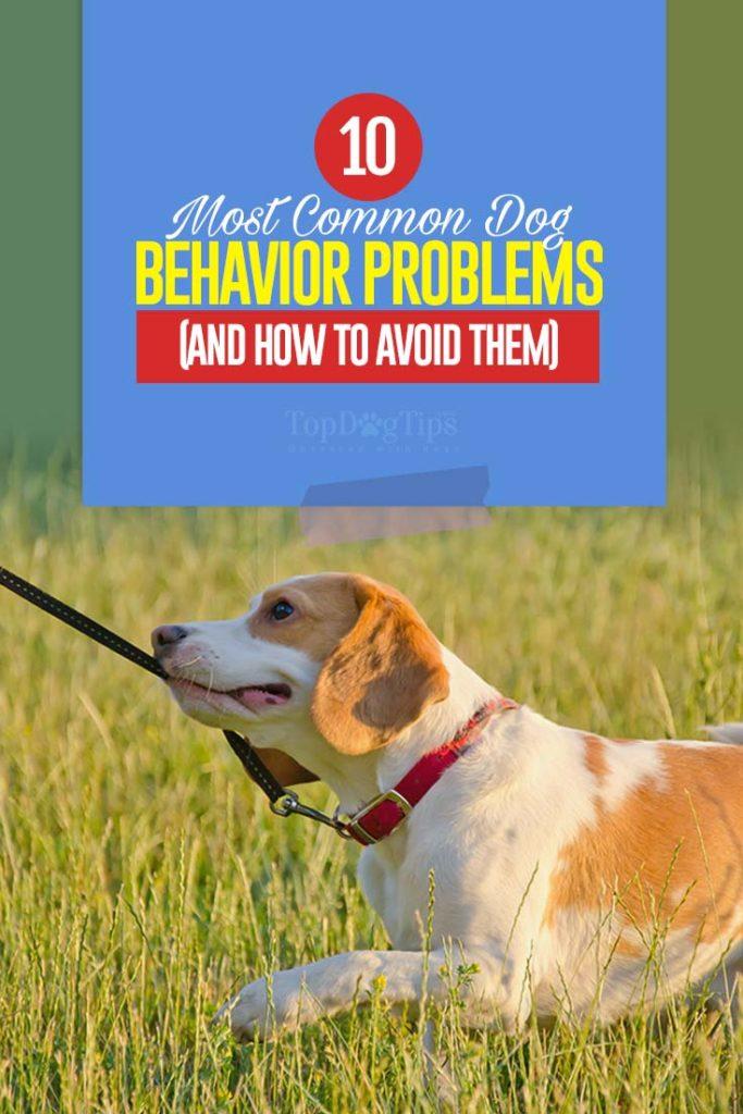 10 Dog Behavior Problems