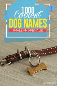 1000 Most Cool Dog Names (male + female)