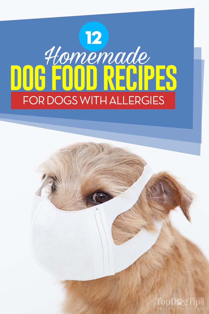 12 Homemade Dog Food for Allergies Recipes