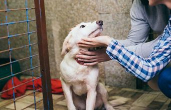 12 Ways to Help Homeless Pets and Shelters