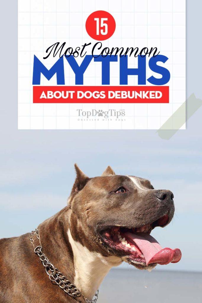 15 Crazy Dog Myths