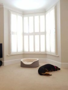 Different Air Quality in Homes With Dogs