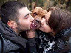Do Loving Dogs Still Feel Jealousy - Science Says Yes